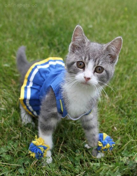 465e511d35acf27fab29821065f0c484--cheerleading-animals-in-clothes.jpg