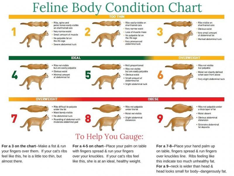 Body-Condition-Feline-Chart.jpg