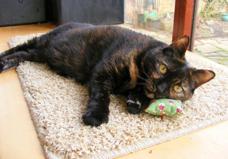 Bonbon catnip pillow.JPG