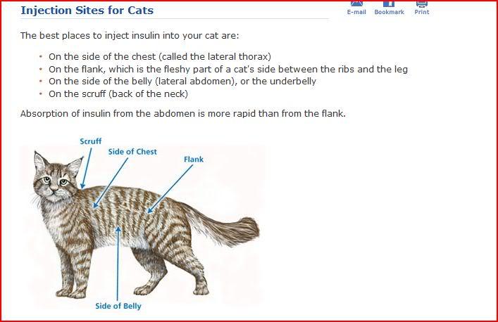 injsitesforcats1.jpg