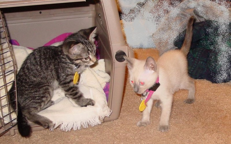 Leo and Chinus in their new home 2006b.JPG