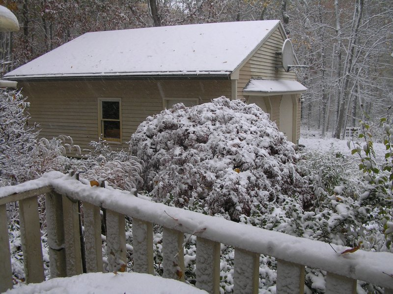 Oct snow on Japanese maple 201030.JPG
