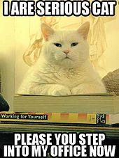 OTJ day 13 serious cat.jpg