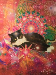 Ann & Scatcats