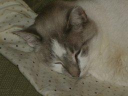 kitty cat burton