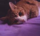 PumpkinBuggy