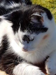 Sam-cat