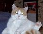 housecats4