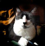 Hubble the wonder cat