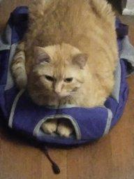 catdaddy1
