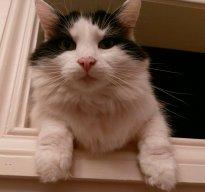 MAGGOT THE CAT