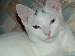 fourcatmom