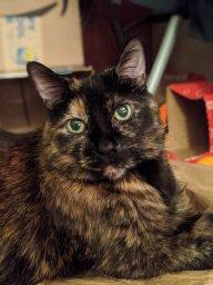 Alicia & Kit cat