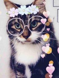 Cat_Ion